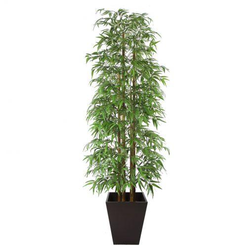 Bamboo Palm