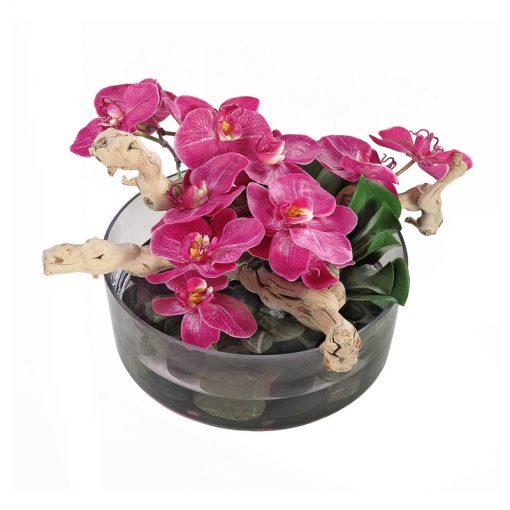 Fuchsia Phalaenopsis Orchid