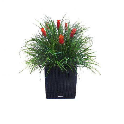 Mixed Tropical Plant