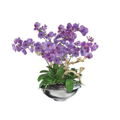 Purple Phalaenopsis Orchid