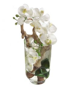 White Phalaenopsis Orchid in Tall Glass Cylinder