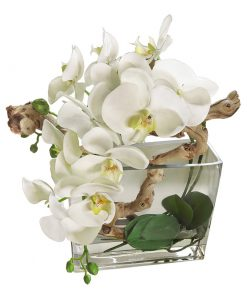 White Phalaenopsis Orchid Square Glass