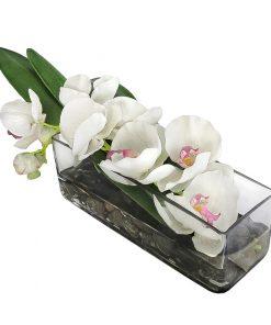 White Phalaenopsis Orchid Pink Pistil