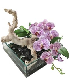 White and Pink Spotted Phalaenopsis Orchid