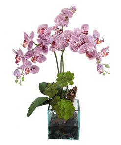 White and Purple Phalaenopsis Orchid