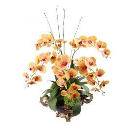 Butter Scotch Phaleanopsis Orchid