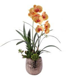 Butter Scotch Phaleonopsis orquid in copper look vase