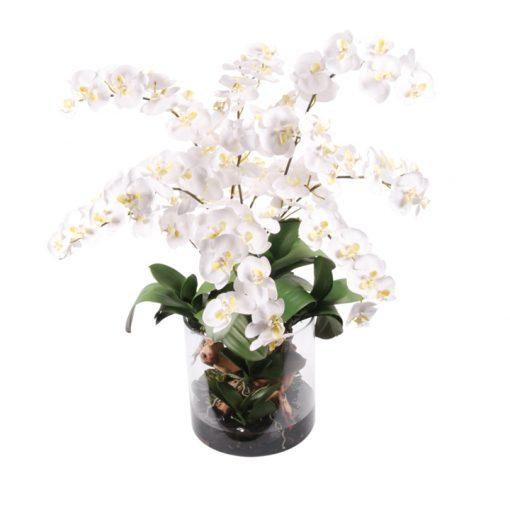 White Phaleanopsis in WaterLook Cylindrical Vase