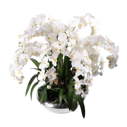 White Phaleanopsis orchid in silver look vase