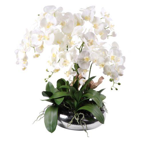 White Phaleanopsis in flat silver look vase