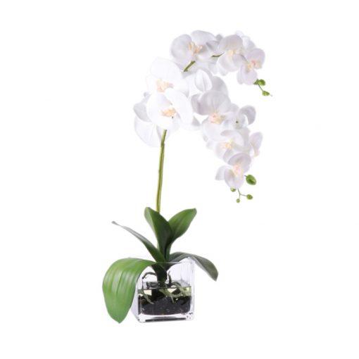 White Phaleanopsis in square glass vase