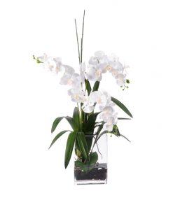 White Phalenopsia in tall square glass vase