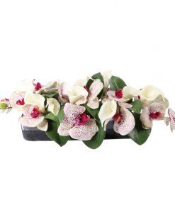 White crimson spotted phaleonopsis orquid