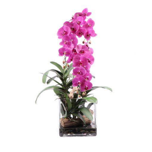 pink phaleonopsis orchid