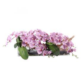 pink spotted phaleonopsis orquid