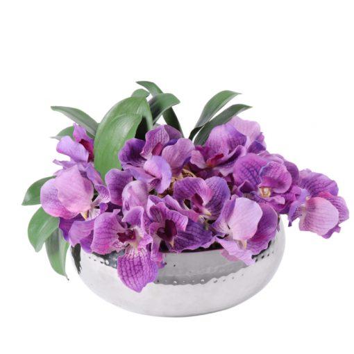 lavander phaleonopsis orquids