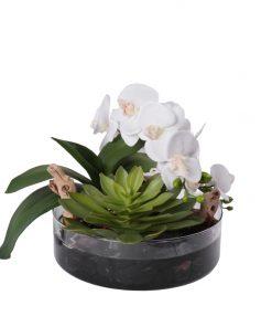 Mixed succulent orchid