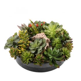 Mixed succulent waterlook