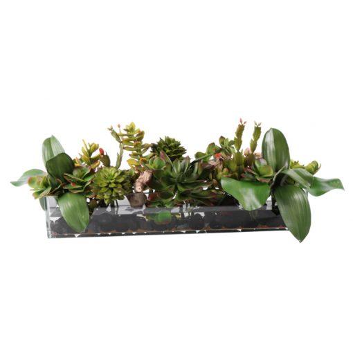 Mixed succulent waterlook