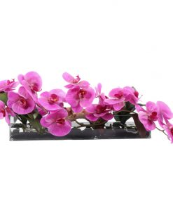 Pink phaleonopsis orquid in glass vase