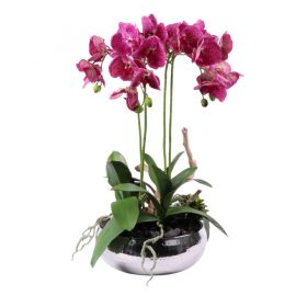 Spotted Pink Phalaenopsis Orchid