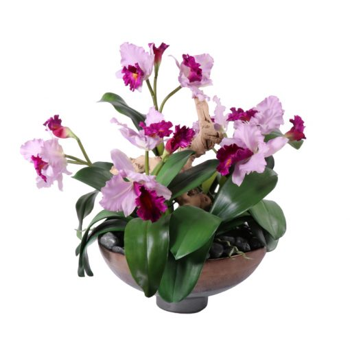 Pink Cattleya Orchid