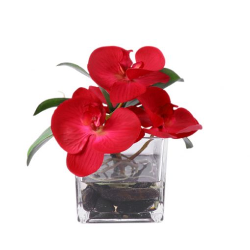 Red Phaleonopsis orquid in square glass vase