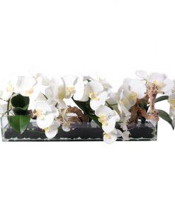 White phaleonopsis orquid with yellow pistils in glass vase