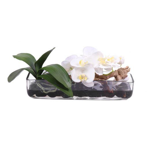 white phaleonopsis orquid yellow pistils WaterLook vase