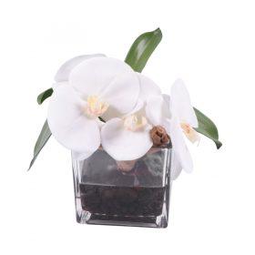 White phaleonopsis orquid in square glass vase